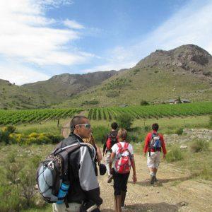 Viñedo Cerro Colorado